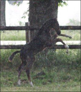 Vijf M en Mad en Mer regen 162